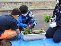 中学生と花植え